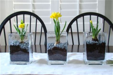forcing flower bulbs indoors in winter