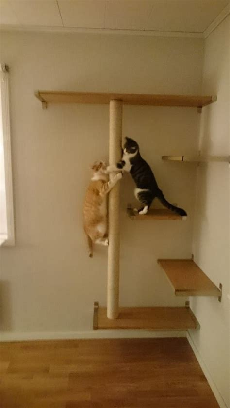 cat wall shelves 570 best images about cat kitten on