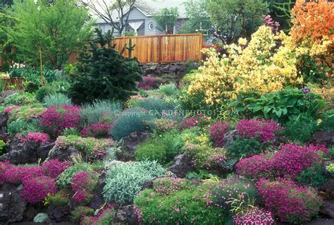 garden bushes with flowers recomended landscaping bushes shrubs