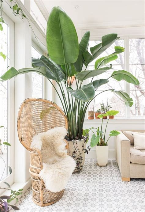 Best House Plants For Window 25 Best Ideas About Interior Plants On House