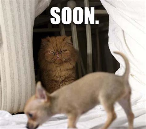 Soon Cat Meme - soon know your meme
