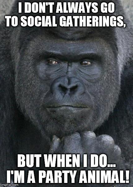 Gorilla Memes - world s most handsome gorilla imgflip