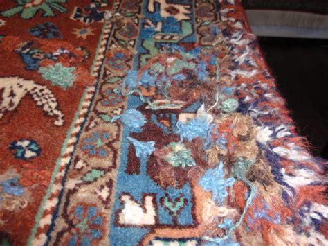 motten im teppich was tun teppich mottenbehandlung teppichmotten fra 223 beseitigen