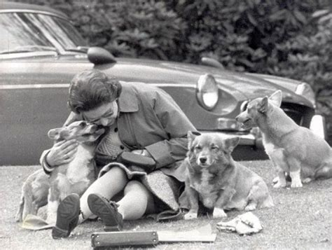 queen elizabeth dog 145 best the queen and her dogs images on pinterest