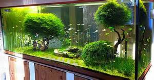 Aquascape Shop by Kundenaquarien Aquascaping Shop F 252 R Naturaquarien