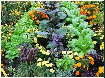 Companion Planting Vegetable Gardening Plant Companions Companion Flowers For Vegetable Garden