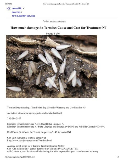 how much does a nj how much damage do termites cause and cost for treatment