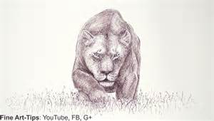 how to draw draw a lioness with a marker mountain lion