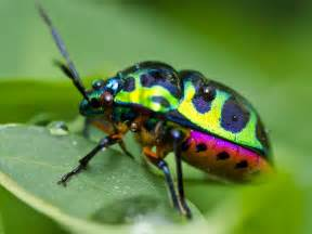 colorful bugs beetle inspiration ideas insects