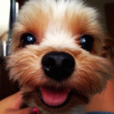 smiling puppies 8 1 13 9 1 13 kittens puppies and cupcakes pictures and gifs