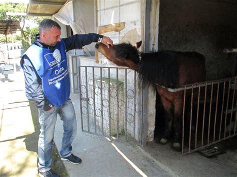 animali da cortile elenco sulla carta agriturismo di fatto co di prigionia per
