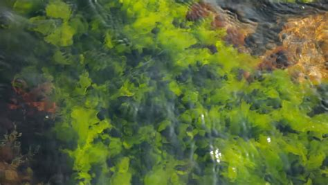 beautiful seaweed algae are developing on the waves stock footage video 850660 shutterstock