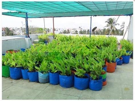 grow bag  terrace gardening  rs  p
