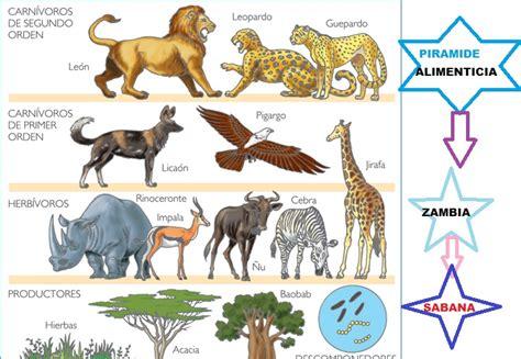 cadenas y redes y piramides alimenticias redes cadenas y piramides alimenticias zambia