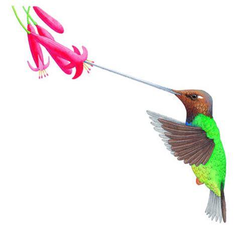 how do hummingbirds eat