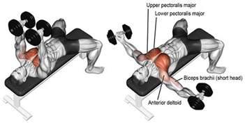 flat bench flys inner chest workout 3 exercises to build inner pecs for