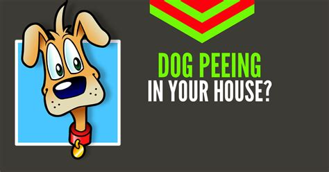 get dog to stop peeing in house 5 hacks to stop your dog from peeing in the house good doggies online