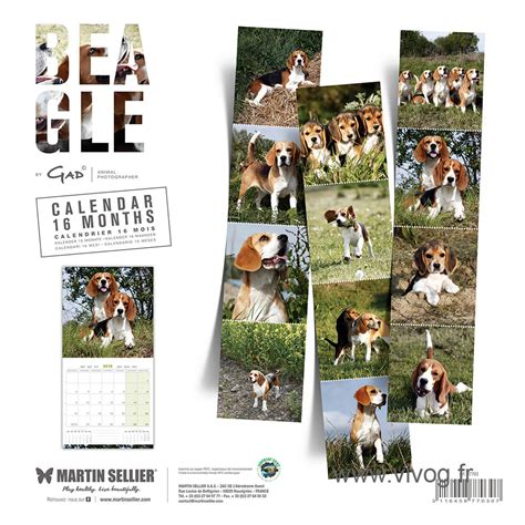 Calendrier Martin Sellier Race Beagle Calendrier Chien 2018 Martin Sellier