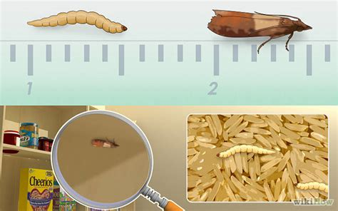 How To Get Rid Of Moths In Pantry by Pagina 7 Denuncian La Presencia De Gusanos En Paquetes