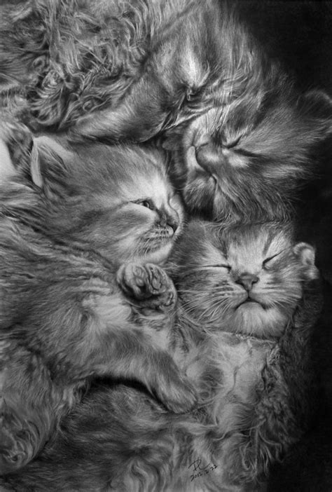 15 cat pictures you won't believe are pencil drawings   22