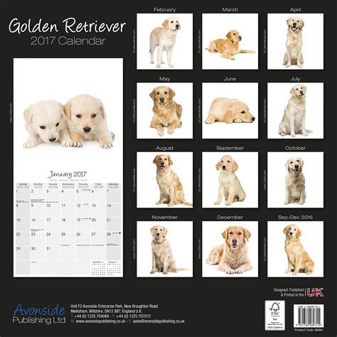 golden retriever price range golden retrievers calendar 2017 30464 golden retriever breeds