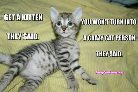 Meme Kitten - cat humor 4 page 23 forums at psych central