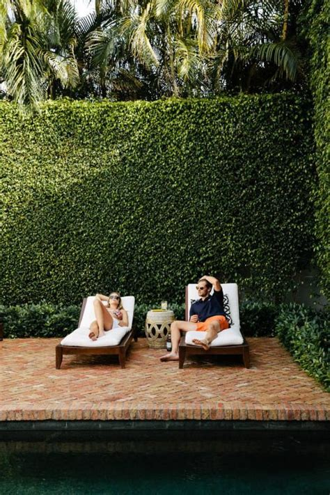 backyard love this is the perfect hedge for use as a privacy fence to