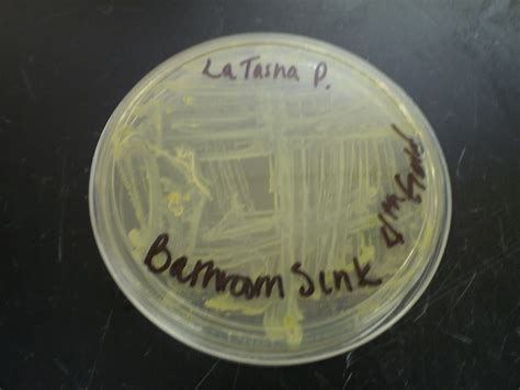 hooverscience bathroom bacteria