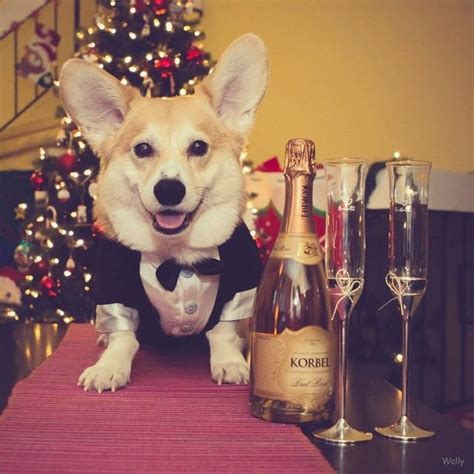 new year for dogs dogs who are so ready to celebrate new year s modern