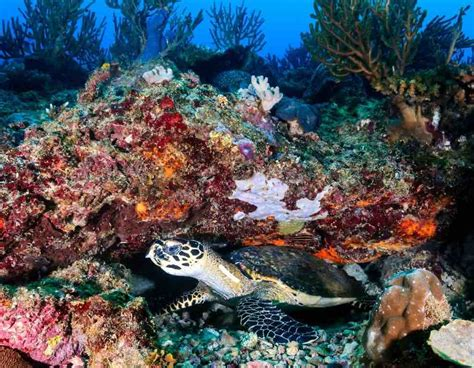 impressive coral reefs   world easy planet