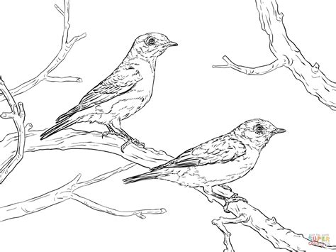 eastern bluebird pair coloring page free printable