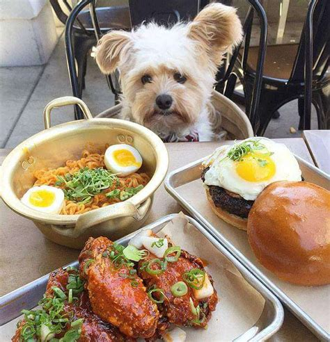 can dogs eat snaps popeye the foodie is the cutest food instagram profile that will definitely make