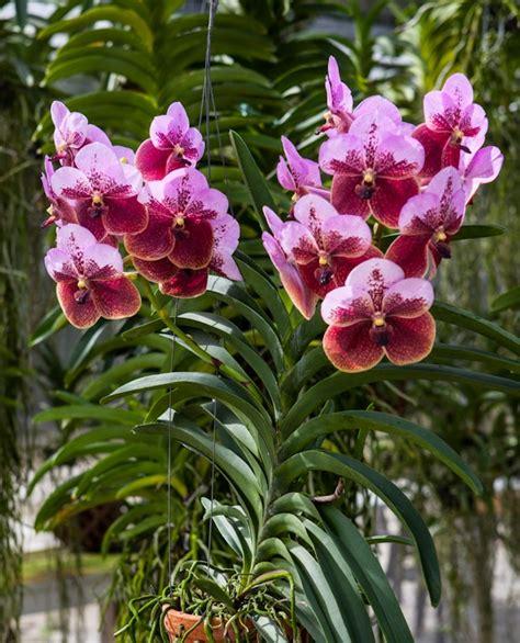 Zimmerpflanze Kaufen 711 by 278 Besten Orchideen Bilder Auf Gepflegt