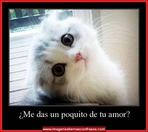 Imagenes Tiernas Con Frases Para Compartir En Facebook | im 225 genes para descargar gratis de gatitos con frases