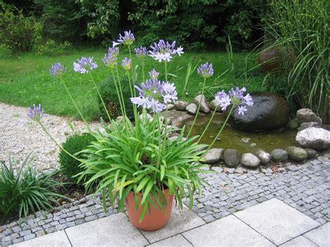 gardening trends 2017 hot garden trends for 2017 cosy home blog