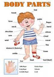 english worksheet body parts classroom poster