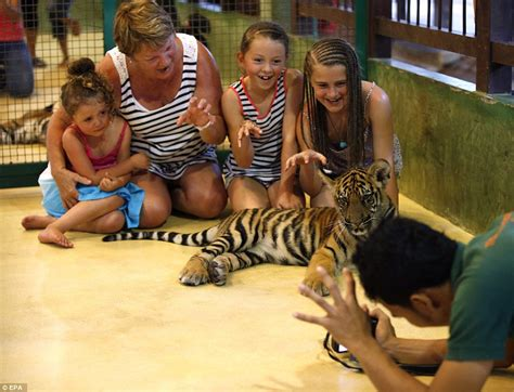 the smallest creatures a fateful road trip of murder mystery and suspense books tiger kingdom tourists get to unchained tigers on