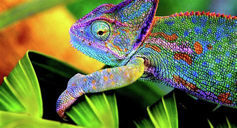 chameleon color change wow science gives us e skin that changes colors like a