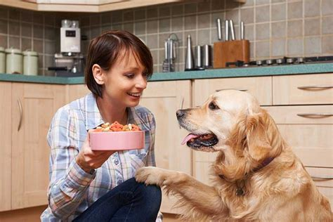puppy manners teaching your manners through nation