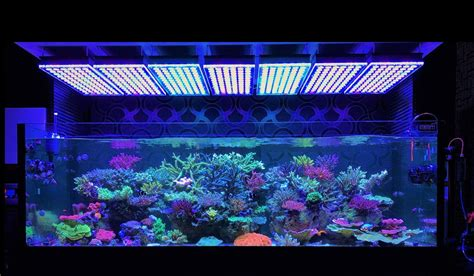 Lu Led Aquarium Air Laut atlantik v4 reef aquarium led lighting orphek aquarium led lighting