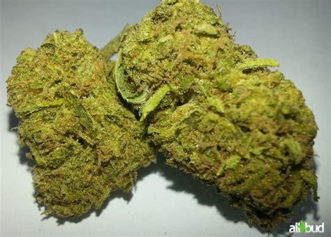 black strain black sugar marijuana strain reviews allbud