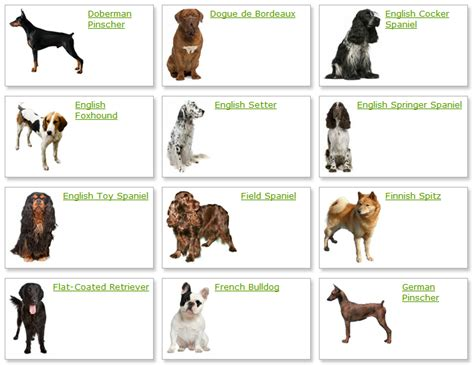 list of dogs all list of different dogs breeds march 2012