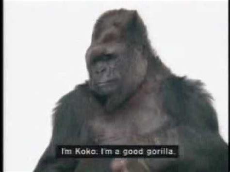 Koko Vio meet koko ambassador for great apes psa1