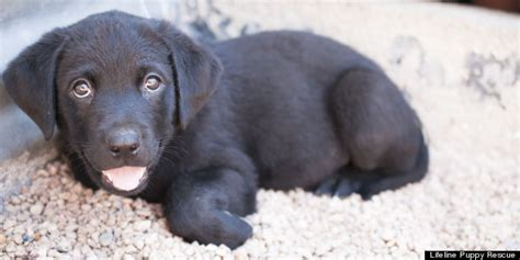 lifeline puppy brighton puppy rescue inspired by royal baby george adopt a pup named after past