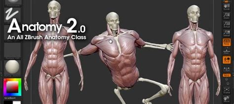 zbrush anatomy tutorial pixologic zbrush blog 187 register now for anatomy 2 0 from