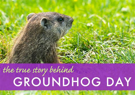 groundhog day ita the real story groundhog day inhabitat green