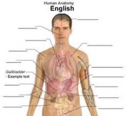 Human body body human human figure