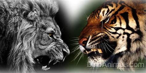 Fight Like A Tiger Win Like A Chion Darmadi Darmawangsa 1 versus tiger fight dinoanimals