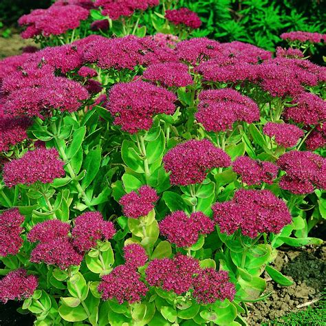 10 top fall blooming flowers the best fall blooming flowers for your yard page 12 of