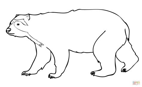 spectacled bear coloring page spectacled andean bear coloring page free printable